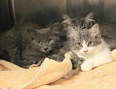 More than 50 cats rescued from a home in Tucson