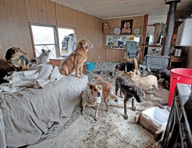How you can help animal hoarders living in your community
